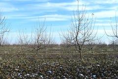 Νέος οπωρώνας μήλων Στοκ Φωτογραφία