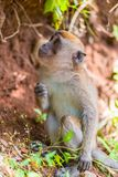 Νέος πίθηκος κοντά στο δέντρο Στοκ εικόνες με δικαίωμα ελεύθερης χρήσης