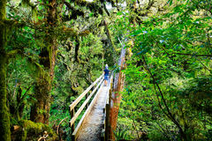 Νέος πατέρας με την κόρη του στο τροπικό δάσος, εθνικό πάρκο Egmont, Νέα Ζηλανδία Στοκ Φωτογραφία