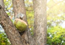 Νέος σκίουρος στο δέντρο στο πάρκο διαφήμιση στοκ φωτογραφίες