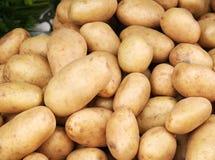Νέος σωρός πατατών Στοκ Φωτογραφία