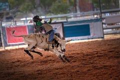 Νέος ταύρος Bucking γύρων κάουμποϋ στο ροντέο Στοκ φωτογραφίες με δικαίωμα ελεύθερης χρήσης