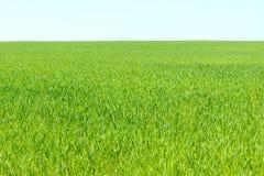 Νέος τομέας greenwheat Στοκ φωτογραφίες με δικαίωμα ελεύθερης χρήσης