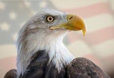 Νέος φαλακρός αετός μπροστά από τη αμερικανική σημαία Στοκ φωτογραφία με δικαίωμα ελεύθερης χρήσης