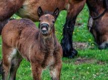 Νέο άλογο με μια πολύ αστεία έκφραση στο πρόσωπό του σαν γελούσε στοκ φωτογραφία με δικαίωμα ελεύθερης χρήσης