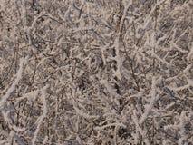 Νέο δάσος νεράιδων έτους ` s Στοκ Εικόνες