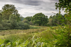 Νέο δάσος, Χάμπσαϊρ, UK στοκ φωτογραφίες με δικαίωμα ελεύθερης χρήσης