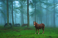 Νέο άλογο στο ομιχλώδες δάσος Στοκ φωτογραφία με δικαίωμα ελεύθερης χρήσης