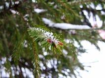 Νέο δέντρο έτους Στοκ φωτογραφία με δικαίωμα ελεύθερης χρήσης