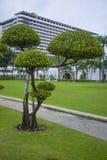 Νέο δέντρο - Ταϊλάνδη Στοκ εικόνα με δικαίωμα ελεύθερης χρήσης