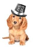 νέο έτος κουταβιών s παραμονής Στοκ εικόνα με δικαίωμα ελεύθερης χρήσης