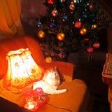 Νέο έτος με ένα κατοικίδιο ζώο Στοκ Φωτογραφίες
