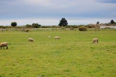 νέο αγρόκτημα Ζηλανδία Στοκ Φωτογραφία