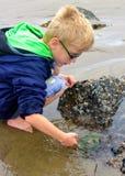 Νέο αγόρι που εξερευνά τη λίμνη παλίρροιας Στοκ Φωτογραφία