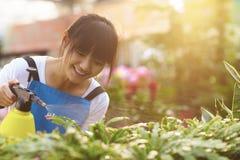 Νέο ασιατικό θηλυκό λουλούδι ποτίσματος ανθοκόμων στοκ εικόνες