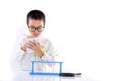 Νέο ασιατικό σπορόφυτο εγκαταστάσεων ελέγχου αγοριών στο εργαστήριο Στοκ Φωτογραφίες