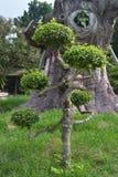 Νέο ασυνήθιστο δέντρο στο υπόβαθρο του παλαιού στοκ εικόνες με δικαίωμα ελεύθερης χρήσης