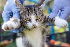 Νέο γατάκι στα ανθρώπινα χέρια Στοκ Εικόνες
