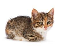 Νέο γατάκι Στοκ Φωτογραφία