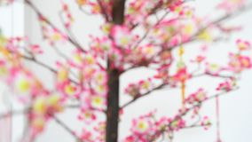 Νέο δέντρο ανθών ντεκόρ έτους παραδοσιακού κινέζικου απόθεμα βίντεο