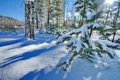 Νέο δασικό δάσος χειμερινών νεράιδων έτους μετά από τις χιονοπτώσεις Μακριές μπλε σκιές στο άσπρο χιόνι στοκ εικόνες με δικαίωμα ελεύθερης χρήσης