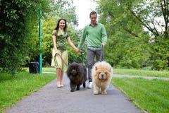 Νέο ζεύγος που περπατά με τα σκυλιά κατοικίδιων ζώων στοκ φωτογραφία