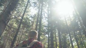 Νέο ζεύγος που περπατά στα ξύλα κατά τη διάρκεια της ηλιόλουστης ημέρας απόθεμα βίντεο