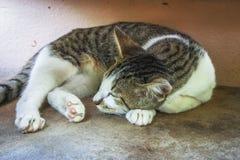 Νέο ζώο κινηματογραφήσεων σε πρώτο πλάνο ύπνου γατών χαριτωμένο στοκ φωτογραφία