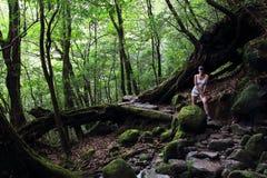 Νέο θηλυκό περπάτημα οδοιπόρων που περιβάλλεται από τα αρχαία δέντρα κέδρων σε Shiratani Unsuikyo Ravinepark Στοκ φωτογραφία με δικαίωμα ελεύθερης χρήσης