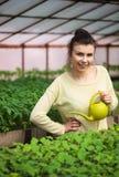 Νέο κορίτσι αγροτών που ποτίζει τα πράσινα σπορόφυτα στο θερμοκήπιο Στοκ φωτογραφία με δικαίωμα ελεύθερης χρήσης