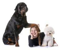 Νέο κορίτσι και σκυλιά στοκ εικόνες με δικαίωμα ελεύθερης χρήσης