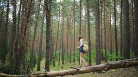 Νέο κορίτσι με ένα σακίδιο πλάτης στα ξύλα απόθεμα βίντεο
