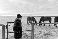 Νέο κορίτσι με τα άλογα Στοκ Εικόνα
