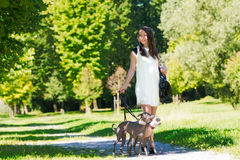 Νέο κορίτσι με δύο greyhounds στο πάρκο Στοκ φωτογραφίες με δικαίωμα ελεύθερης χρήσης
