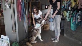 Νέο κορίτσι που παίρνει τα ενδύματα για το σκυλί της απόθεμα βίντεο