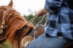 Νέο κορίτσι στο άλογο Στοκ φωτογραφία με δικαίωμα ελεύθερης χρήσης