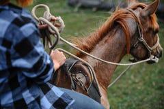 Νέο κορίτσι στο άλογο Στοκ εικόνα με δικαίωμα ελεύθερης χρήσης