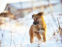 Νέο κουτάβι στο χιόνι το χειμώνα Στοκ φωτογραφίες με δικαίωμα ελεύθερης χρήσης