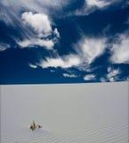νέο λευκό άμμων του Μεξικ&omic Στοκ Φωτογραφίες