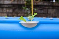 Νέο μαρούλι hydroponics στο αγρόκτημα στην Ταϊλάνδη στοκ φωτογραφία με δικαίωμα ελεύθερης χρήσης