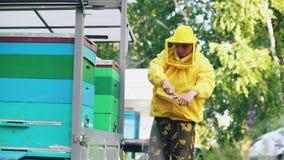 Νέο μελισσοκόμων πλαίσιο μελιού ατόμων καθαρό ξύλινο που λειτουργεί στο μελισσουργείο στη θερινή ημέρα Στοκ εικόνες με δικαίωμα ελεύθερης χρήσης