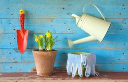 Νέο λουλούδι με τα εργαλεία κηπουρικής, Στοκ εικόνα με δικαίωμα ελεύθερης χρήσης