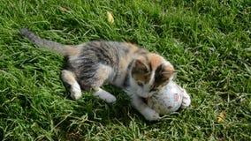 Νέο παιχνίδι γατών στη χλόη με τη γήινη σφαίρα απόθεμα βίντεο