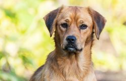 Νέο πορτρέτο σκυλιών Στοκ φωτογραφία με δικαίωμα ελεύθερης χρήσης