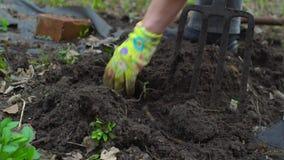 Νέο σκάβοντας φυτόχωμα γυναικών από το pitchfork Εδαφολογική προετοιμασία για τη φύτευση Με ένα φορημένο γάντια χέρι κλείστε επάν φιλμ μικρού μήκους