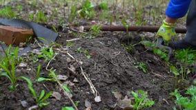 Νέο σκάβοντας φυτόχωμα γυναικών από το pitchfork Εδαφολογική προετοιμασία για τη φύτευση κλείστε επάνω Σε αργή κίνηση 120fps φιλμ μικρού μήκους