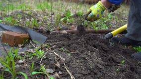 Νέο σκάβοντας φυτόχωμα γυναικών από το pitchfork Εδαφολογική προετοιμασία για τη φύτευση Με το χέρι κλείστε επάνω Σε αργή κίνηση  απόθεμα βίντεο