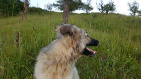 Νέο σκυλί πορτρέτου Στοκ εικόνα με δικαίωμα ελεύθερης χρήσης