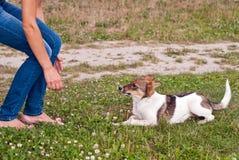 Νέο σκυλί Στοκ Εικόνα