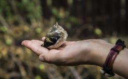 Νέο σπουργίτι πουλιών υπό εξέταση Στοκ φωτογραφία με δικαίωμα ελεύθερης χρήσης